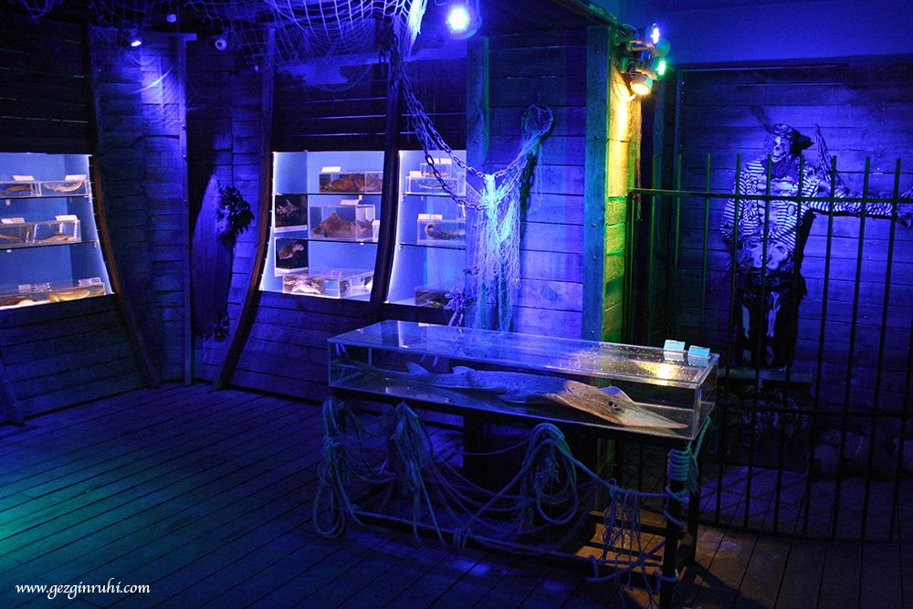 Antalya'nın yaşayan müzeleri - Antalya Deniz Biyoloji Müzesi