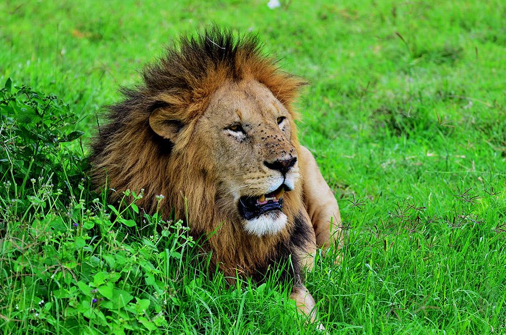 Buse Aganday-Tanzanya Erkek Aslan