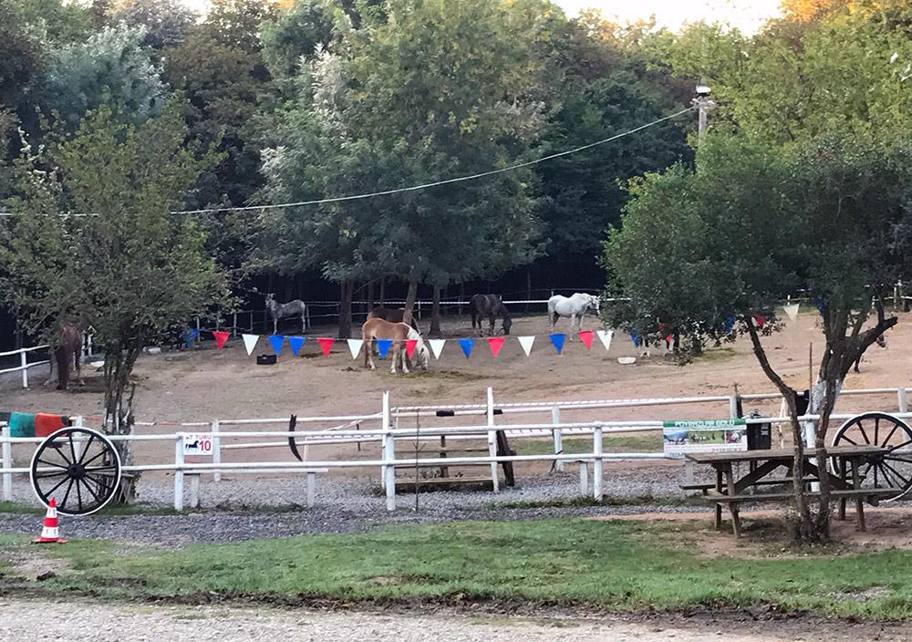 Sakarya Poyrazlar Gölü Tabiat Parkı'nda çocuklar için birçok oyun alanı bulunuyor.
